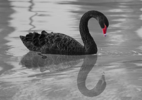 Book Review – Black Swan